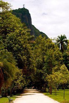 Jardim Botânico Rio de Janeiro Brasil - By: Lisette Eppink