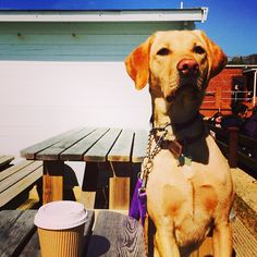 Guarding the coffee at the beach...