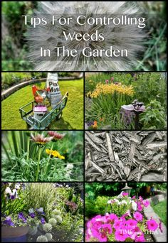 Tips For Controlling Weeds In The Garden ~ I love to garden and not spend my time battling weeds. Here are my tips for controlling weeds in the garden...