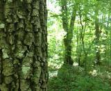 Cu ocazia mini-vacantei de 1 Mai am ales sa vizitez un loc de care auzisem si citisem : Parcul Dendrologic de la Bazos. Este la doar 20 de km de Timisoara.