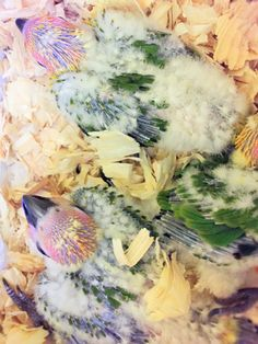 Sunday Conure Babies, Hybrid Conure / Sun conure and Jenday conure. www.TheBestBird.com Birds For Sale, Conure, Sunday, Babies, Painting, Art, Art Background, Domingo, Babys