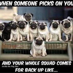 Pug Pack
