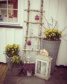 Vår på trappa #veiengård #livetpålandet #vår #vårpynt #påskeliljer #stemorsblomst #blomster #stige #diy #homemade #hjemmelaget #koselig by helljoha