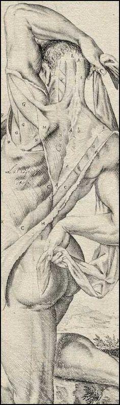 Spiegel, Adriaan van (1578-1625 http://www.pinterest.com/pin/287386019943684612) and Casseri, Giulio (ca. 1552-1616).    Title: De humani corporis fabrica libri decem (pinterest.com/pin/287386019941581713/). See: pinterest.com/pin/287386019947538245