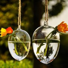 Soledi Hanging Round Egg Glass Clear Flower Vase Hydroponic Container Home Decor * For more information, visit image link.
