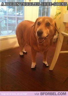 Dog wearing toddler shoe-socks. That's what pets are for.