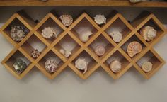Seashell display for an ocean themed room.