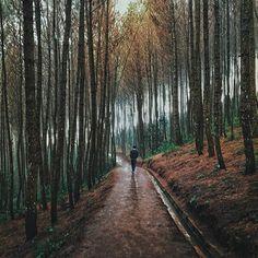 Hutan Pinus Bukit Moko, Cimenyan, Bandung, Jawa Barat Supported by @xiaomi_id Credit by : @arizalkyo #wonderful_location