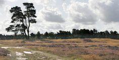 Stichting het Utrechts Landschap, landgoed Heidestein Driebergen