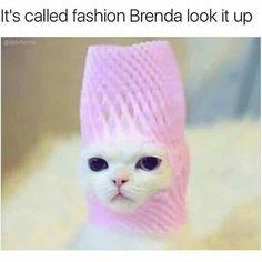 Stylish kitty!