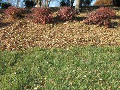 Compost or mulch leaves