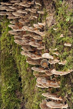 13 Most bizarre mushrooms : TreeHugger