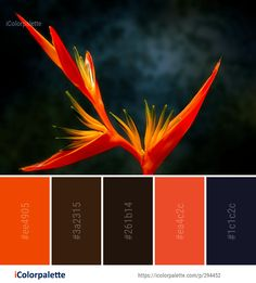 Color Palette Ideas from Flower Flora Plant Image Orange Color Palettes, Colour Pallete, Colour Combo, Colour Combinations, Color Schemes, Plant Images, Native American Beading, Colour Board, Bedroom Colors