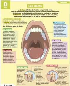 The teeth, Educational Science, Body Preschool, Education Degree, French Classroom, French Resources, French Teacher, School Motivation, French Lessons, Learn French, Study French
