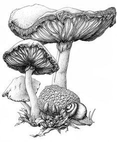 mushroom ink by bigredsharks traditional art drawings technical . Mushroom Drawing, Mushroom Art, Botanical Drawings, Botanical Art, Illustration Botanique, Illustration Art, Arte Sketchbook, Desenho Tattoo, Ink Pen Drawings