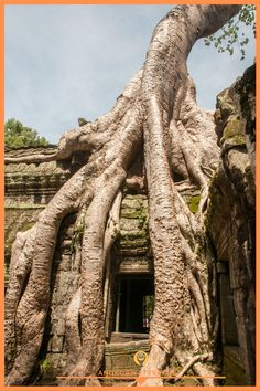 Ta Prohm, Cambodian Culture, Old Ruin Places To Travel, Travel Destinations, Places To Visit, Ta Prohm, Angkor Wat Cambodia, Cambodia Travel, Siem Reap, Asia Travel, Southeast Asia