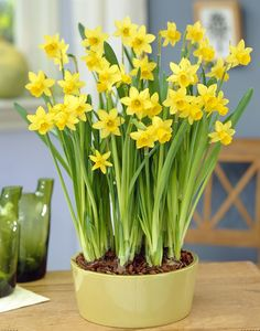 Best of Springtime Bulbs: Daffodils