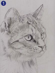 Retrato de um Gato: Passo.1