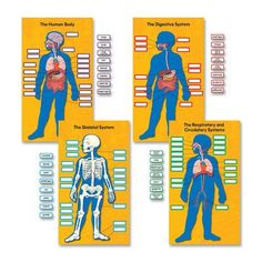 CARSON-DELLOSA PUBLISHING Human Body Bulletin Board Cut Out Set