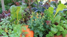 Placing vegetables, herbs and other edibles amongst flowers is a great way to add interesting textures and colors to the garden. Learn more about using edible landscaping in this article. Fruit Plants, Fruit Trees, Edible Plants, Garden Pests, Herb Garden, Fruit Bearing Trees, Bountiful Garden, List Of Flowers, Plant Needs