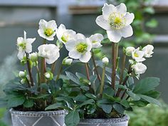 Virágok a téli kertbe   Gardenista Gardens, Flowers, Plant, Outdoor Gardens, Garden, House Gardens