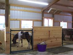 getting ready - Page 2 - Miniature Horse Forum - Lil Beginnings Miniature Horse Talk Forums - Page 2 Mini Horse Barn, Miniature Horse Barn, Miniature Ponies, Horse Barn Plans, Mini Horses, Baby Horses, Barn Stalls, Horse Stalls, Horse Barns