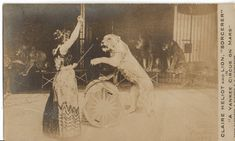 Vintage circus photo postcard, RPPC, Claire Heliot, Lion Tamer, and lions, 1899