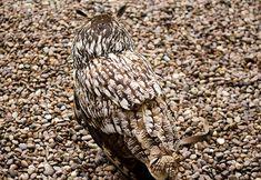 uilen 6