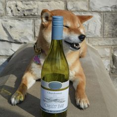 2014 Oyster Bay ChardonnayJust hanging out in the sun with my... #shiba