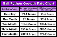 Image result for ball python morph chart breeding