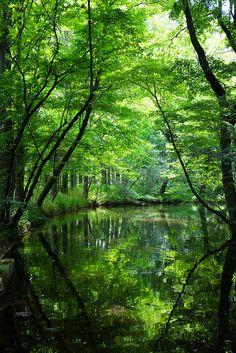 Nature Natur