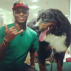 bernese mountain dog / Hulk / Dog