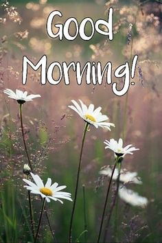 Good Morning Images Hd, Good Morning Love, Morning Wish, Good Morning Quotes, Good Morning Greeting Cards, Morning Greetings Quotes, Just Saying Hi, Allah, Roses