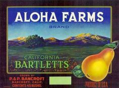 Highland San Bernardino Canna Flowers #1 Orange Citrus Fruit Crate Label Print