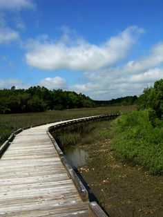 Sewee Shell Ring Trail, Francis Marion National Forest (Charleston County, South Carolina)