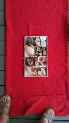 Shell Display with Shells and Tray by thebeachgirls on Etsy