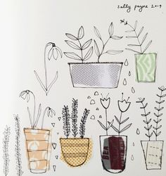 Illustration plants plantsketches-sallypayne2014