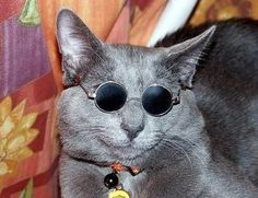 45 Cats Wearing Glasses | Smaller Glasses are More Stylish for My Face