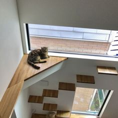 Do this in stairwell (cat shortcut from landing to 2nd floor)