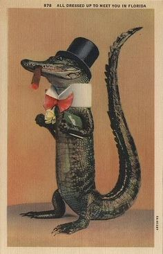 top hat!alligator