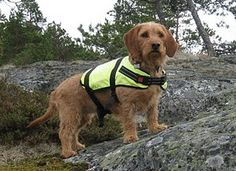 On the Cliff of the Fishing Port, dog's lifejacket