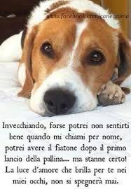 Risultati Immagini Per Cuccioli Di Cane Jack Russel Con Frasi