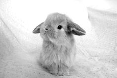 cute bunny / black & white photography