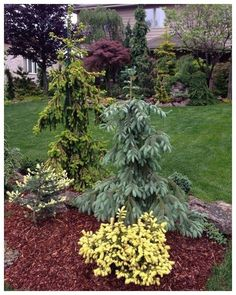 49 simple and low-maintenance ideas for garden design in the front garden 48 – Garden Landscaping ideas – - Home Decoration Front Yard Landscaping Simple, Evergreen Landscape, Garden Design, Garden Shrubs, Evergreen Garden, Shrubs, Yard Landscaping, Landscape, Backyard
