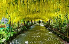 nice 20 Amazing Beautiful Tree Tunnels Landscapes Nature will always impress us, what is more beautiful than being in a tunnel of greenery! We have selected for you 20 amazing beautiful tree tunnels t. World's Most Beautiful, Beautiful World, Beautiful Gardens, Beautiful Places, Beautiful Scenery, Photo Japon, Magic Places, Nova Orleans, Tree Tunnel
