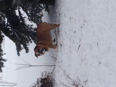 Lucy in the snow.