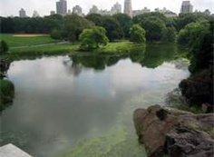 Turtle Pond Ideas - Bing Images