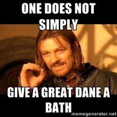 Great dane baths... Truth.