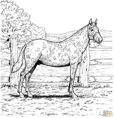 Appaloosa Horse Coloring page | Free Printable Coloring Pages