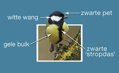 Man of vrouw koolmees? Hoe zie je het verschil tussen man en vrouw? Lees: http://www.beleefdelenteJUNIOR.nl/vogel/koolmees/diaries/17…  #beleefdelente
